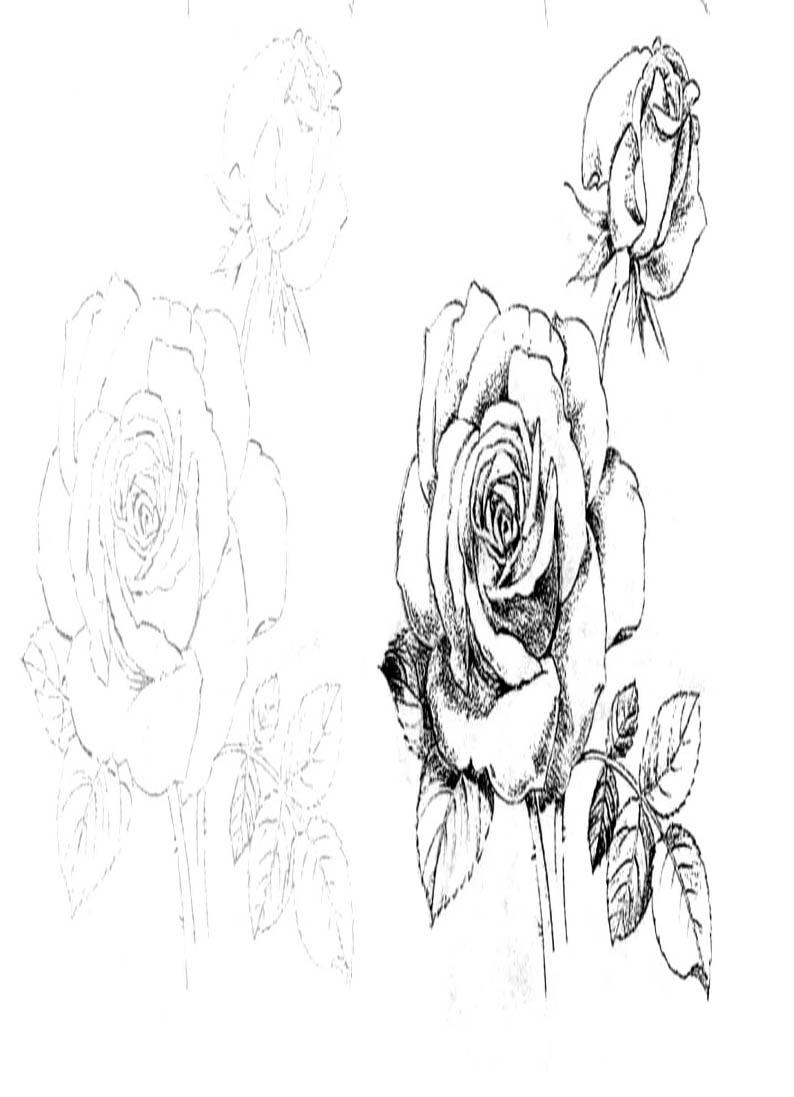 Раскраска цветы Роза,Лилия,Гербера,Ирис,Орхидея,Гвоздика ...